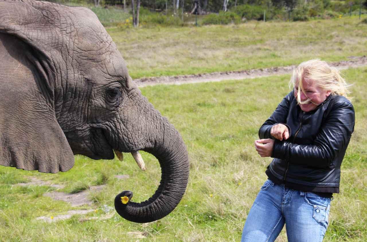 Leni Elefant
