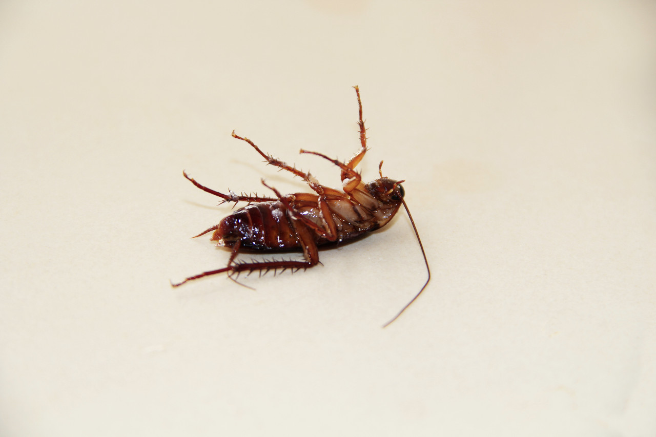 So hälst du Kakerlaken & anderes Ungeziefer fern